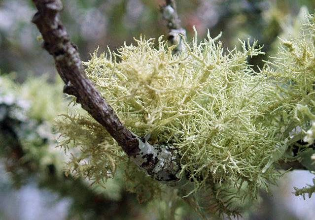 PAIRFUM aromatic woody oak moss lichen natural room fragrance perfume