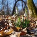 Forest Leaves Snow Drop White Fragrance