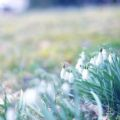 Snowdrop Grass Windsor Park Fresh Green Spring