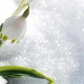 Snowdrop Ice Perfume Fresh UK