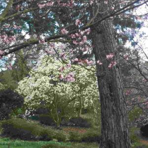 Fragrance Ingredient Natural Essential Oil Magnolia Bloom Windsor Park162355