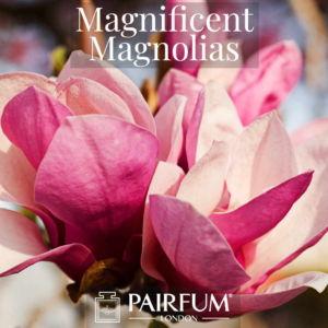 Fragrance Magnificent Magnolias Windsor Park