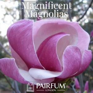 Magnificent Magnolias Windsor Park Fragrance