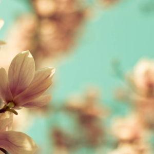 Pairfum Room Fragrance Reed Diffuser Refill Magnolia Tree Flowers