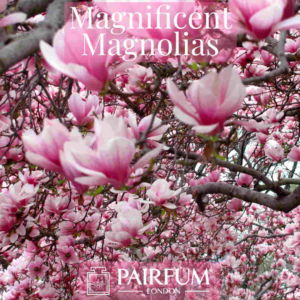 Perfume Ingredient Magnificent Magnolias Windsor Park