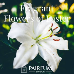 Pairfum London Fragrant Flowers Of Easter White Lily