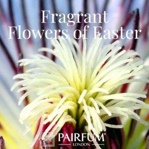 Pairfum London Fragrant Flowers Of Easter Passion Flower