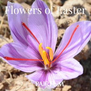Pairfum London Niche Perfumery Flower Of Easter Crocus