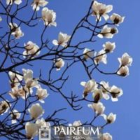 MAGNOLIAS IN BLOOM AGAINST THE SKY
