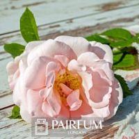 PERFUME INNOVATION LIGHT PINK ROSE ON FLOOR