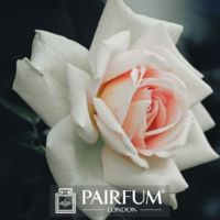 FRAGRANCE TREND WHITE PINK ROSE