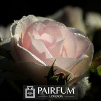 PERFUME WHITE ROSE IN SHADE