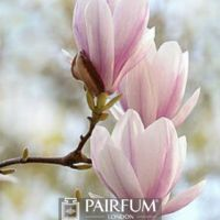 PINK MAGNOLIAS ON A BRANCH