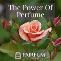Perfume Trend Single Pink Rose Flower