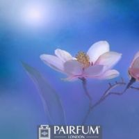 WHITE MAGNOLIA FLOWER ARTWORK