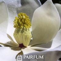 WHITE MAGNOLIA FLOWER POLLEN